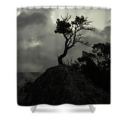 Rooted In Stone Shower Curtain