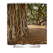 Roots - Banyan Tree Park In Maui Shower Curtain