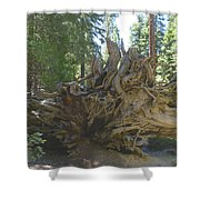 Roots Shower Curtain by Barbara Snyder