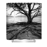 Roots Beach In Black And White Shower Curtain