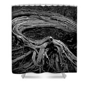 Roots Of A Fallen Tree By Wawa Ontario In Black And White Shower Curtain