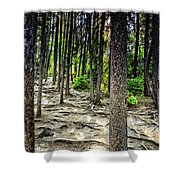 Roots Of Trees Shower Curtain