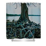 Roots On The Bay Shower Curtain
