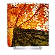 Roots To Branches IIi Shower Curtain