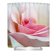 Rosa A Whiter Shade Of Pale  Shower Curtain