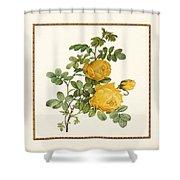 Rosa Sulfurea -yellow Rose  Square Shower Curtain
