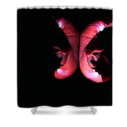 Rose 005 Shower Curtain