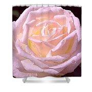 Rose 169 Shower Curtain