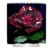 Rose 5 Shower Curtain