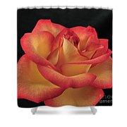 Rose 50 Shower Curtain