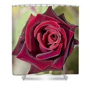 Rose 7 Shower Curtain