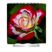 Rose 8 Shower Curtain
