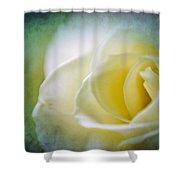 Rose Again Shower Curtain