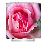Rose And Bud Shower Curtain