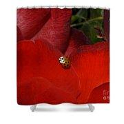 Rose And Ladybug Shower Curtain