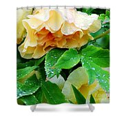 Rose And Leaves On A Rainy Day Shower Curtain