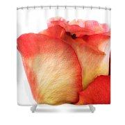 Rose Bud 1 Shower Curtain