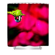 Rose Bud After Rain Shower Curtain