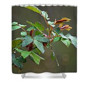 Rose Bush Rain Shower Curtain