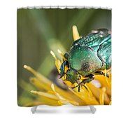 Rose Chafer Shower Curtain