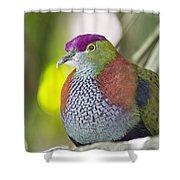 Rose-crowned Fruit Dove Shower Curtain