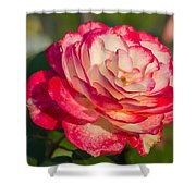 Rose Delight Shower Curtain