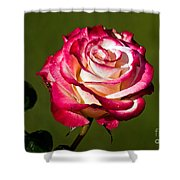 Rose Dick Clark Shower Curtain