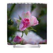 Rose Emergent Shower Curtain