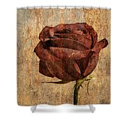 Rose En Variation - S22ct05 Shower Curtain