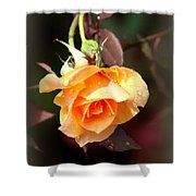 Rose - Flower - Card Shower Curtain