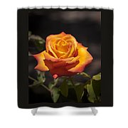 Rose Glow Shower Curtain
