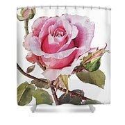 Watercolor Of Pink Rose Grace Shower Curtain