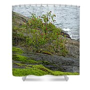 Rose Hip Bush Shower Curtain