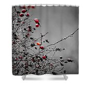 Rose Hip Red Shower Curtain