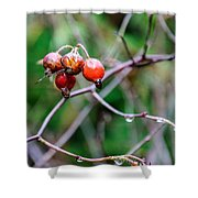 Rose Hip Wet Shower Curtain