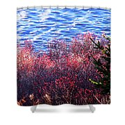 Rose Hips By The Seashore Shower Curtain