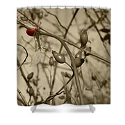 Rose Hips Shower Curtain