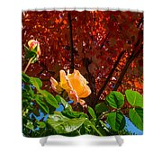 Rose In Autumn Shower Curtain