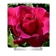 Rose In Bloom Shower Curtain