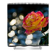Rose In Dappled Afternoon Light Shower Curtain