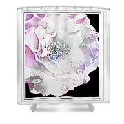 Rose In Pastels Shower Curtain