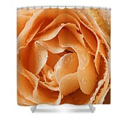 Rose In Rain Shower Curtain