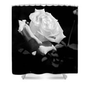 Rose - Infrared Shower Curtain