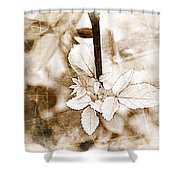 Rose Leaf Photoart Shower Curtain