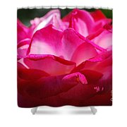 Rose Like A Lotus Flower Shower Curtain