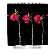 Rose Lineup Shower Curtain