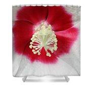 Rose Mallow - Honeymoon White With Eye 03 Shower Curtain