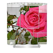 Rose Montage Shower Curtain