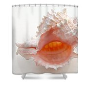 Rose Murex Seashell Shower Curtain