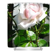 Rose Named Pearl Shower Curtain